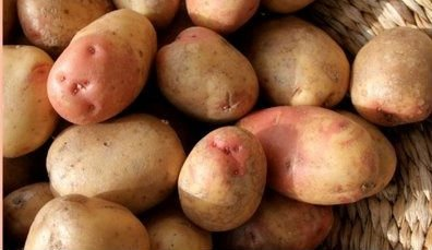10 10 and 15 Tuber packs King Edward Maincrop Seed Potatoes 5