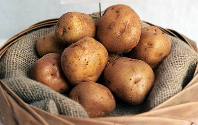 British Queen Seed Potatoes in sack