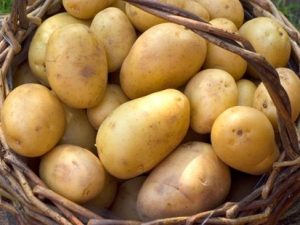 Duke of York Seed Potatoes