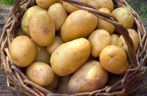 Duke of York Seed Potatoes