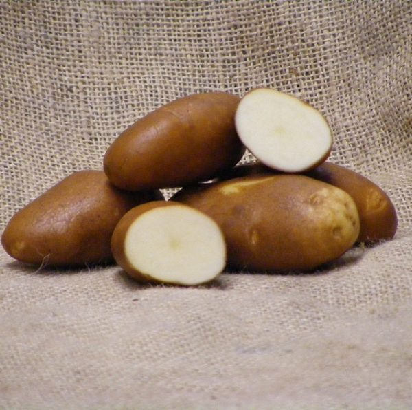 Golden Wonder Seed Potatoes
