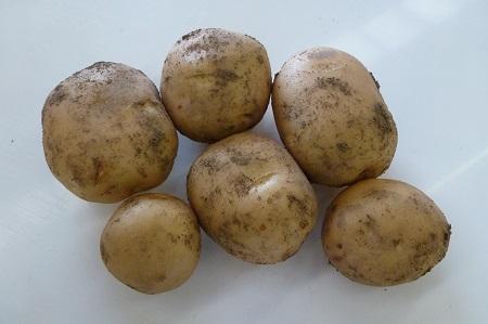 Home Guard Seed Potatoes