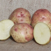 Cara Seed Potatoes Cut