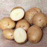 British Queen Seed Potatoes