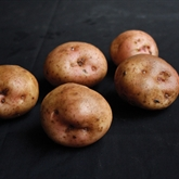 Kerr's Pink Seed Potatoes