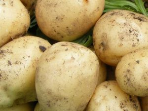 Sunbeam Seed Potatoes