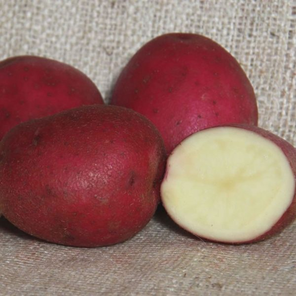 Red Duke of York Seed Potatoes