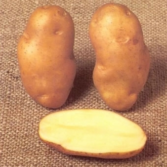 Golden Wonder Seed Potatoes Cut