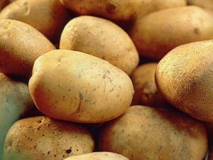 Record Seed Potatoes