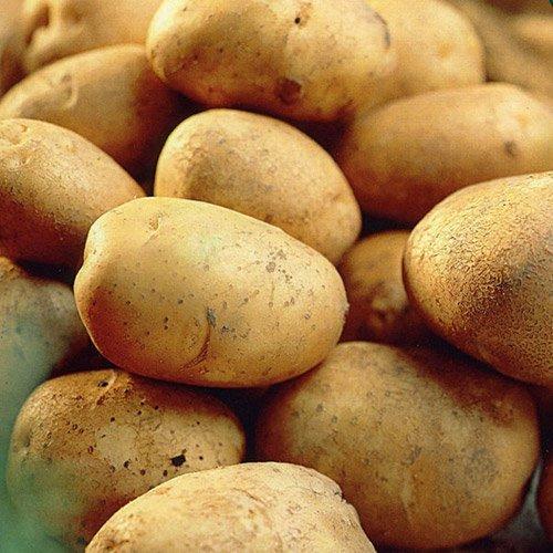 Record Seed Potatoes