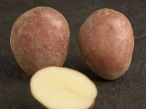 Paramount Seed Potatoes