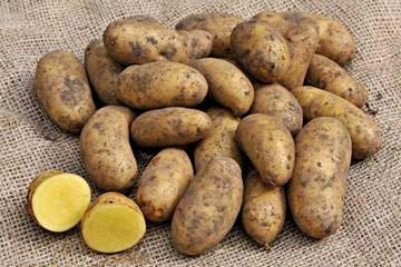 Mayan Gold Seed Potatoes