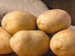 Maris Piper Seed Potatoes