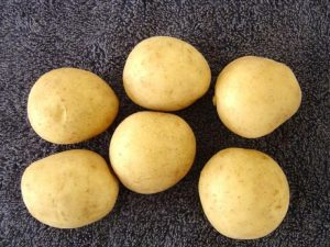Avalanche Seed Potatoes
